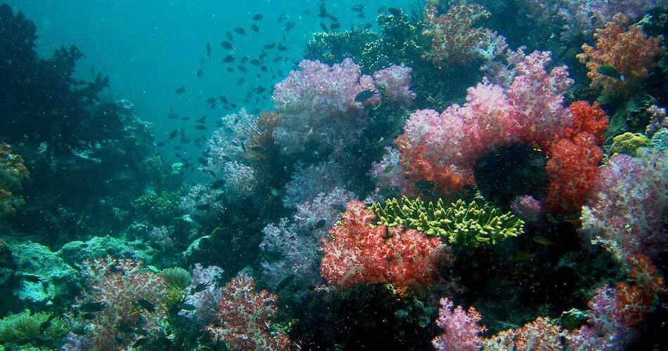 koh Lipe resort castaway divers coral reef not far from Koh Lipe.